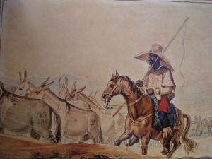 Tropa solta de muares, ciclo tão importante quanto o Ciclo do Ouro no Brasil (Debret - 1820)
